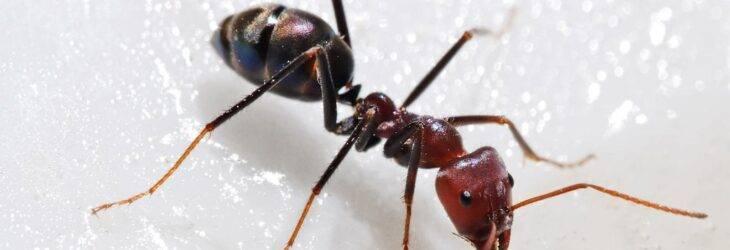 Спать в муравейнике