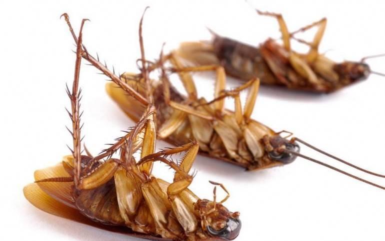 Нашатырь от тараканов