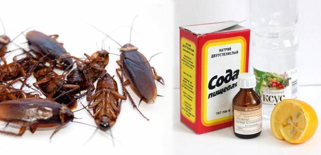 Победить тараканов можно и без химии!