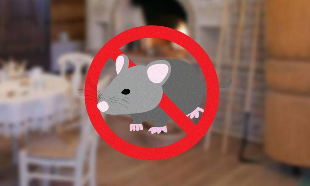 Различные способы ловли мыши без мышеловки