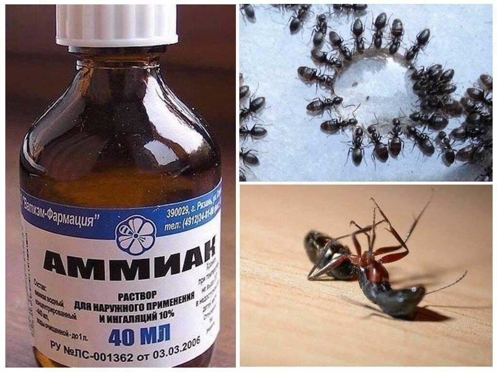 Как бороться с муравьями народными средствами