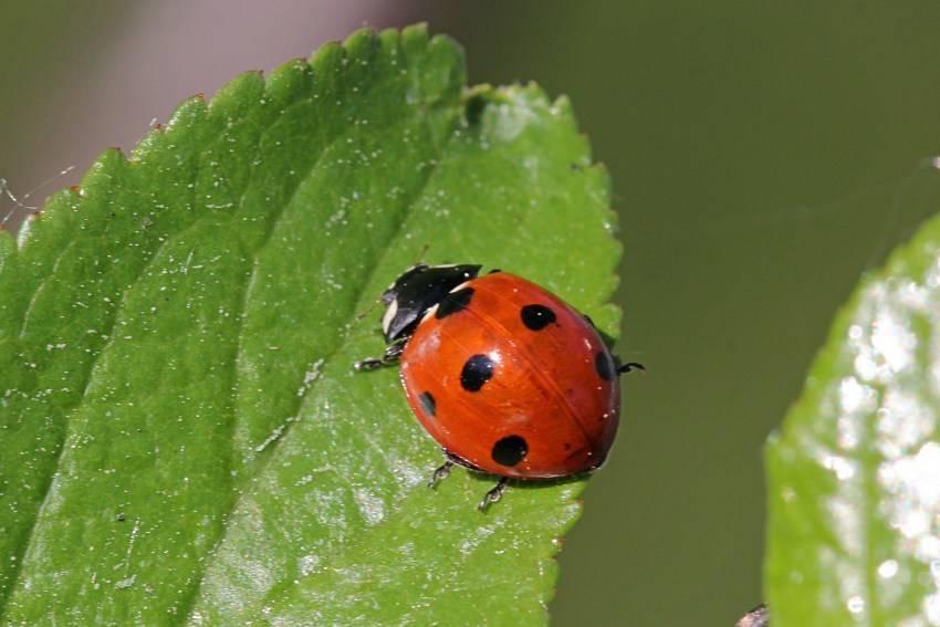 Полезные насекомые сада