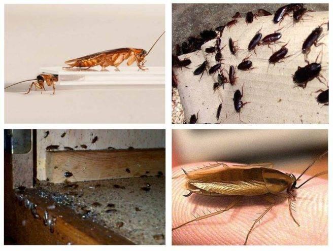 Как уничтожить тараканов в квартире раз и навсегда