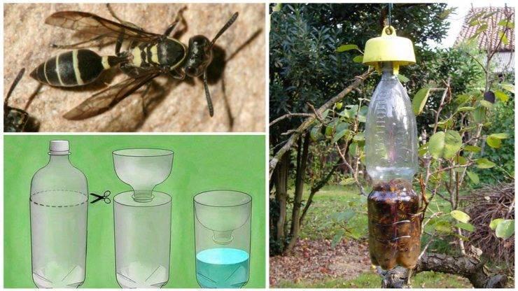 Инсектициды — применение и классификация