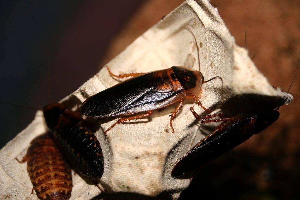 Гель от тараканов: выбираем самый лучший и эффективный