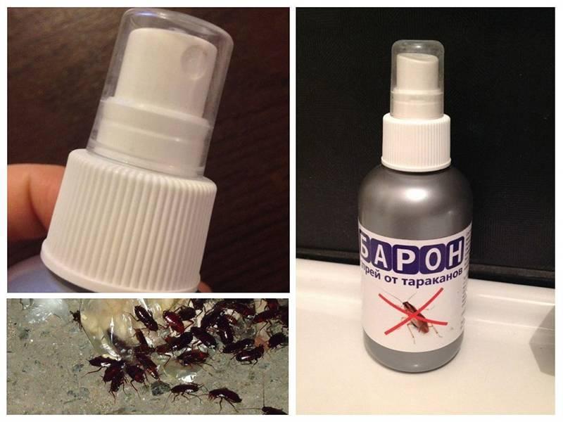 Средство от тараканов глобал (globol) – насколько он эффективен?