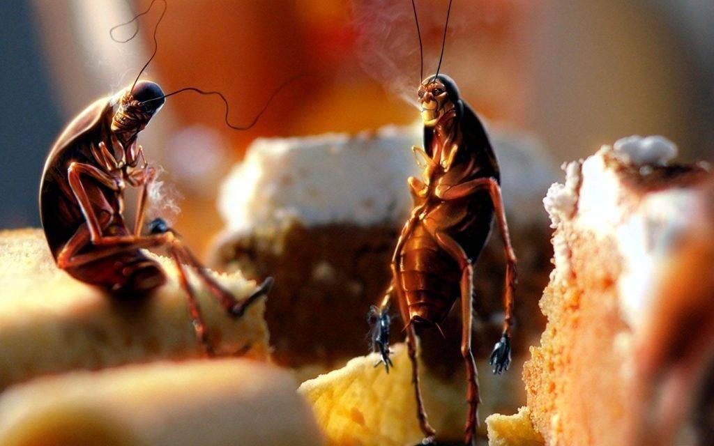 Как вывести тараканов из квартиры навсегда