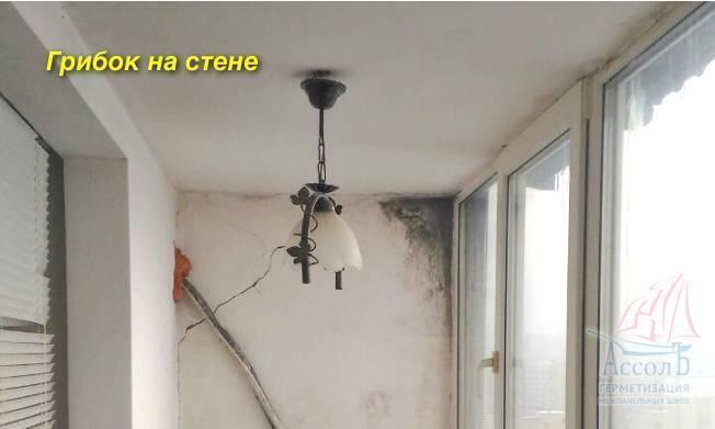 Как убрать плесень со стен в квартире и доме