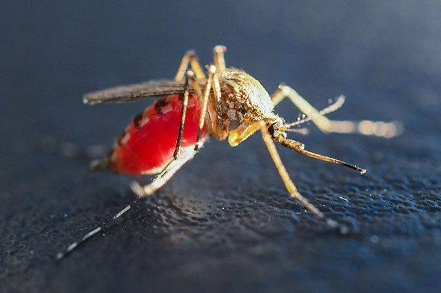 Могут ли комары закусать до смерти человека