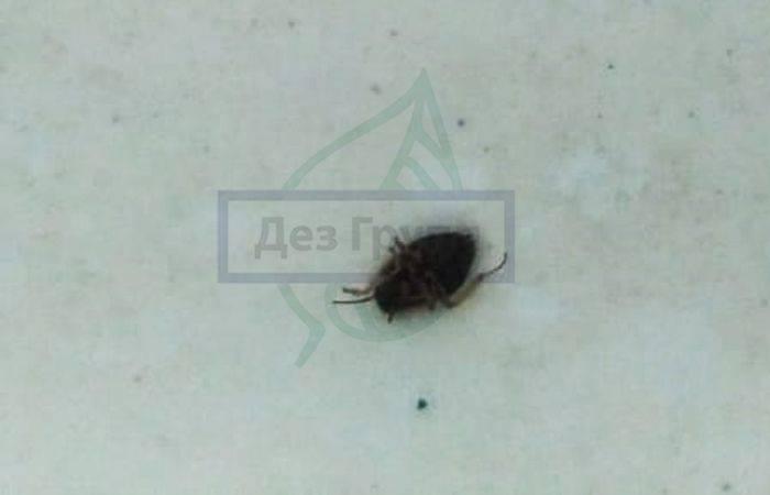 Средство лямбда зонда от тараканов