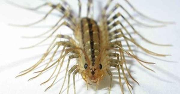 Особенности строения тараканов
