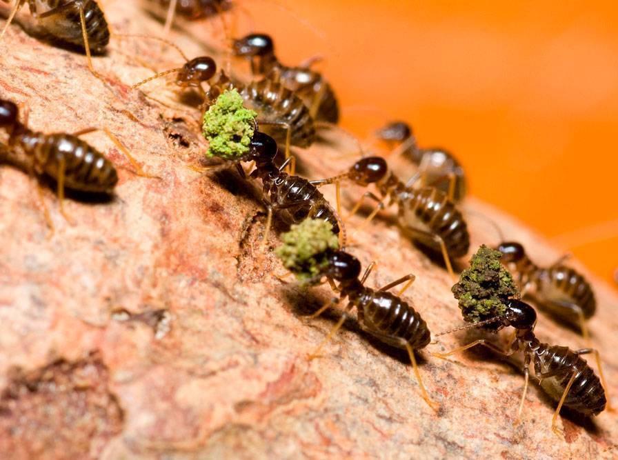 Термиты — совершенные создания природы