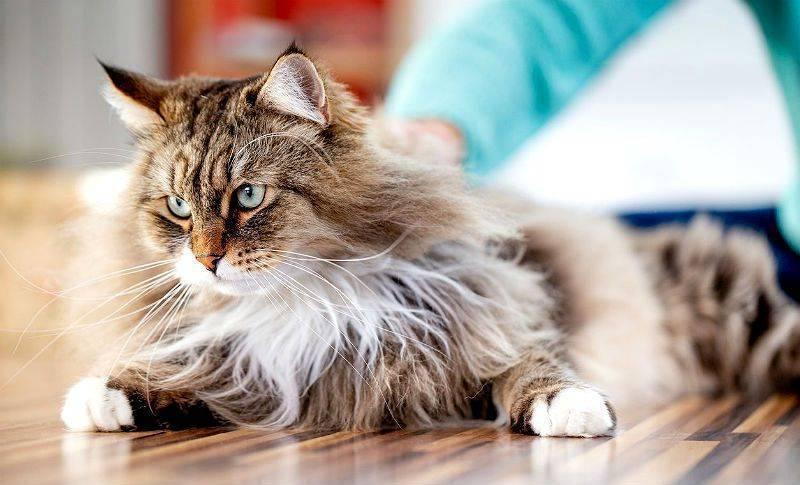Как вытащить клеща у кота — способы и советы