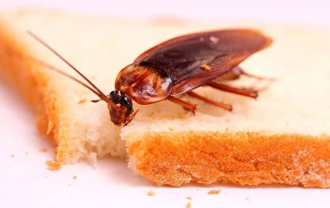 Природные враги тараканов