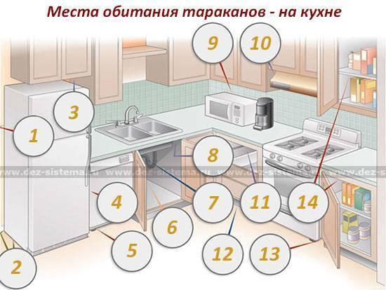 10 способов, как избавиться от домашних тараканов в квартире раз и навсегда в домашних условиях