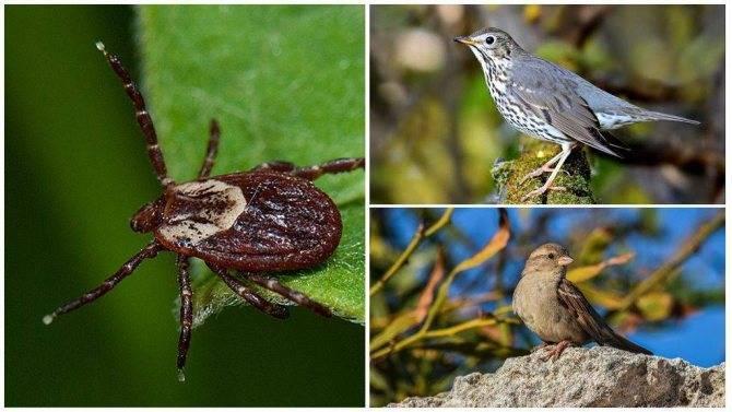 Какую роль выполняют клещи в природе. для чего нужны клещи в природе