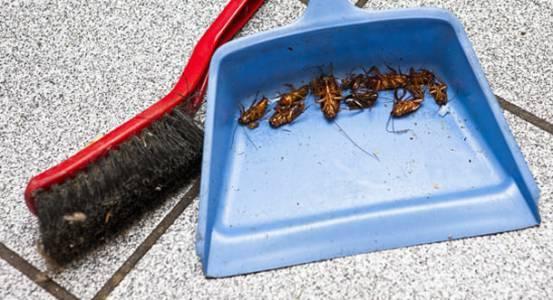 Основные препараты для уничтожения тараканов