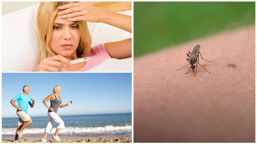 Как видят комары и что их привлекает к человеку. ученые выяснили, как комары находят и выбирают свою жертву комары в темноте