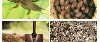 Народные рецепты настоев и отваров для борьбы с болезнями растений и вредителями сада и огорода