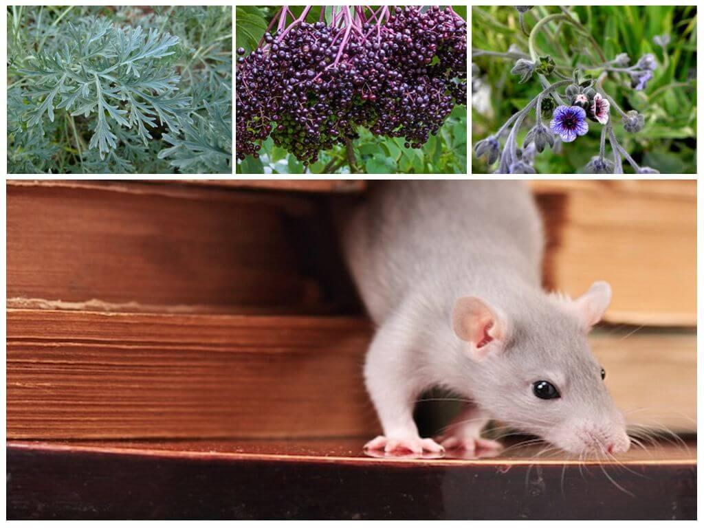 Как быстро и эффективно избавиться от мышей и крыс, 20 средств для борьбы в домашних условиях