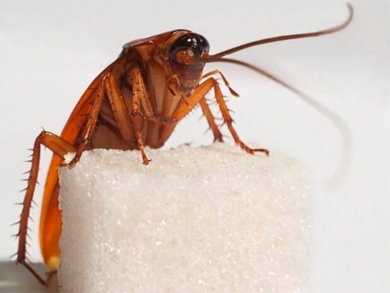 Нашествие двуногих вредителей: кто и зачем приносит в наши дома тараканов