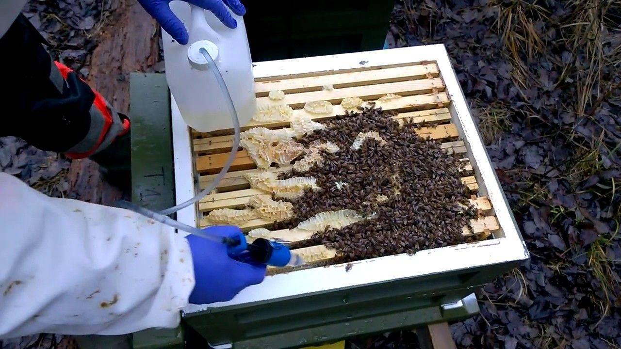 Обработка пчел от клеща весной