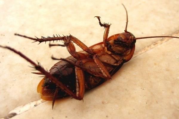 Что нужно знать про достоинства и недостатки лямбды зонд от тараканов