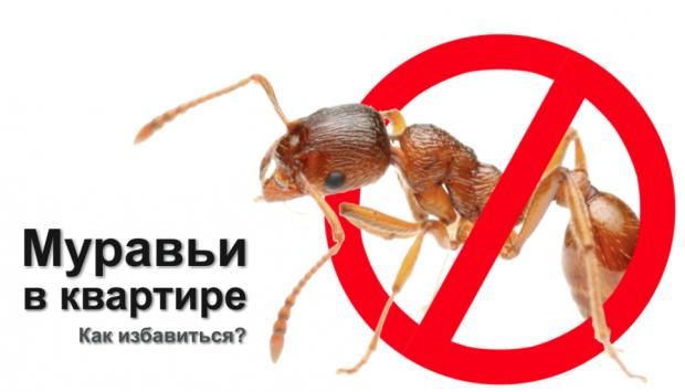 Действенные рекомендации, как избавиться от муравьев на кухне быстро и без вреда для жителей квартиры, дома