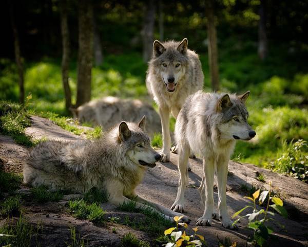 Паук волк в домашних условиях. пауки-волки – терпеливые охотники, которых кормят «ноги