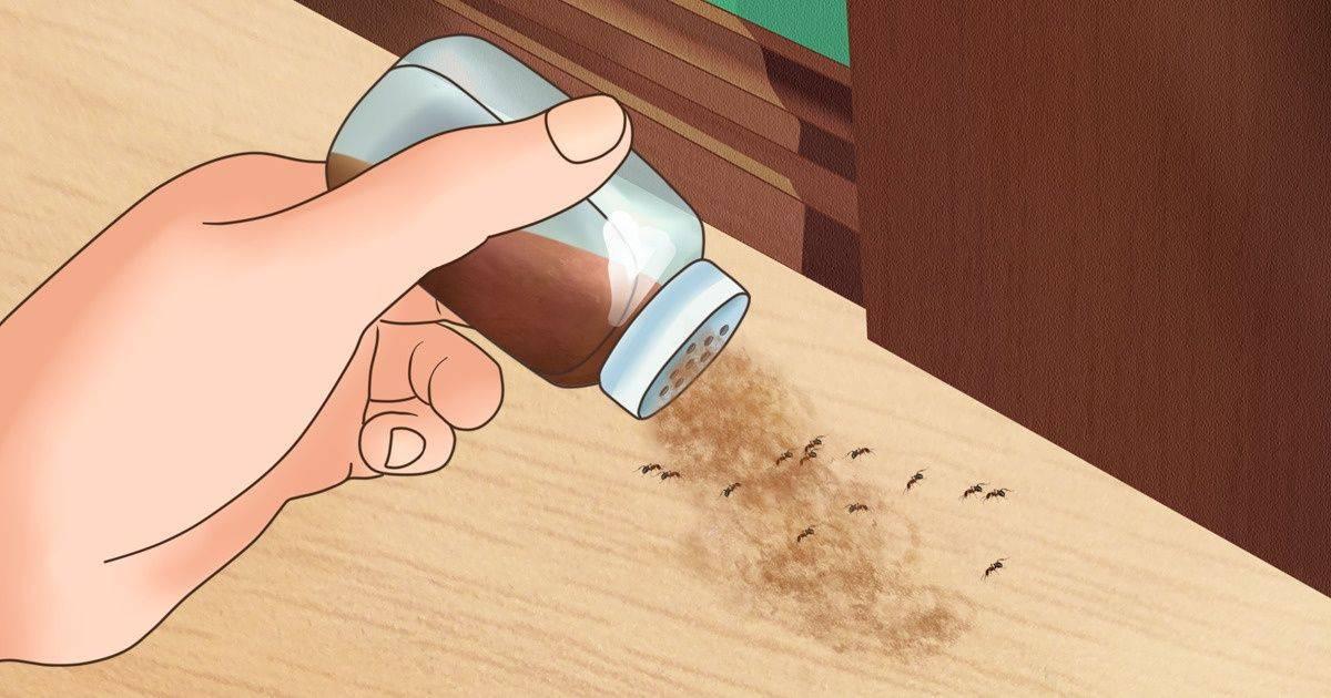 Борьба с муравьями: лучшие способы вывести муравьев из дома