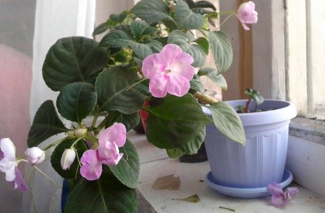 Паутинный клещ – как распознать на растениях и эффективно бороться