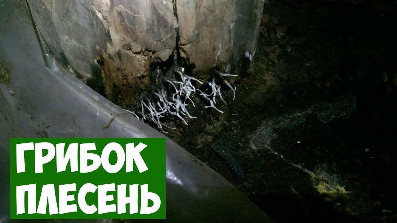 Как избавиться от грибка и плесени в бетонном подвале или погребе