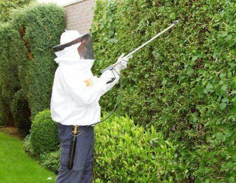 Как бороться с осами на даче даже в недоступном месте