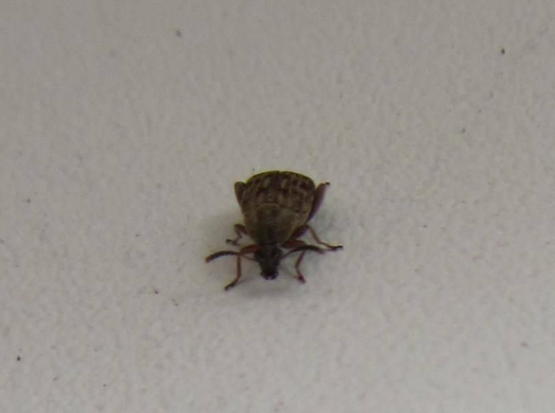 Откуда на подоконнике появляются маленькие жучки, и как от них быстро и просто избавиться