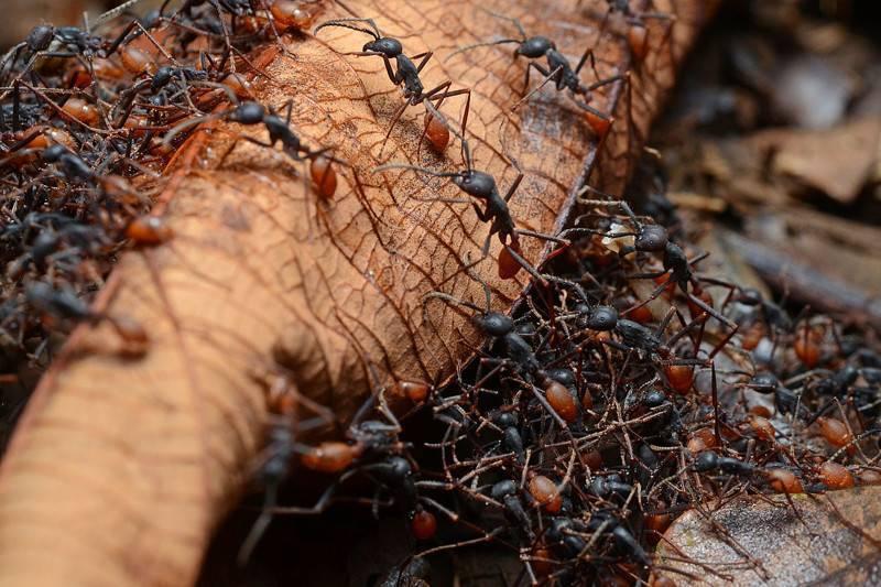 Интересные факты о муравьях, которые вас удивят