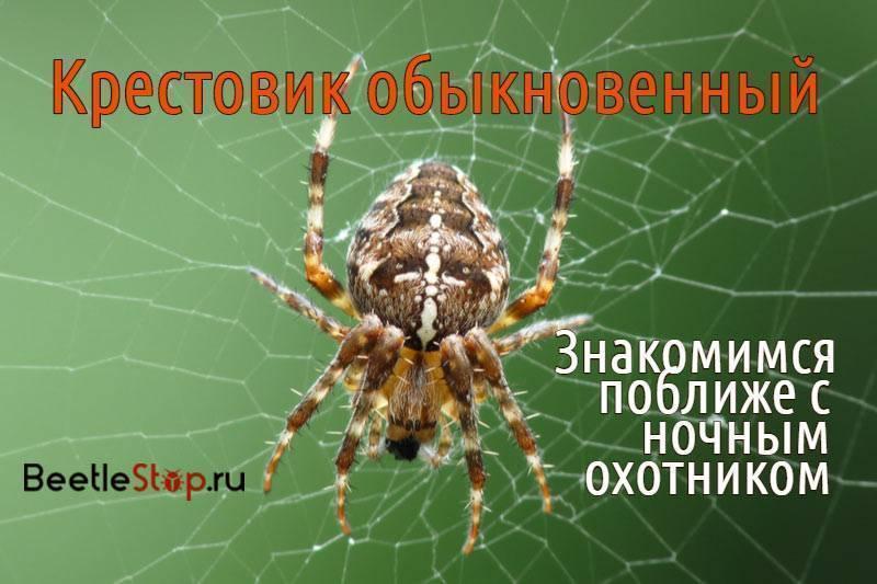 Фауна украины