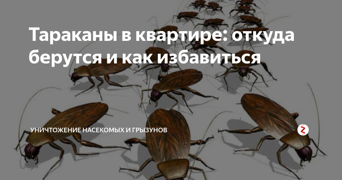 Тараканы в доме — пути проникновения и благоприятные условия