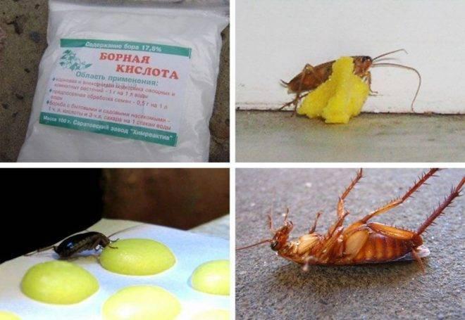 Маленькие черные жучки на кухне – как защитить запасы продовольствия от вредителей