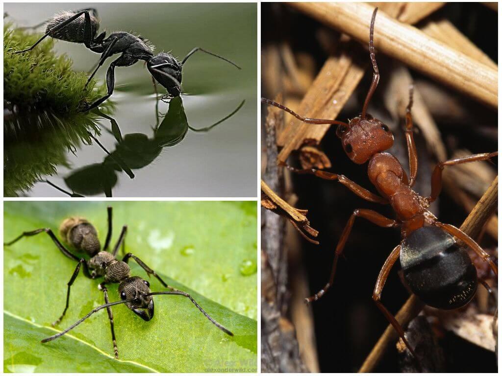 Сколько весит муравей и какой вес он может поднять