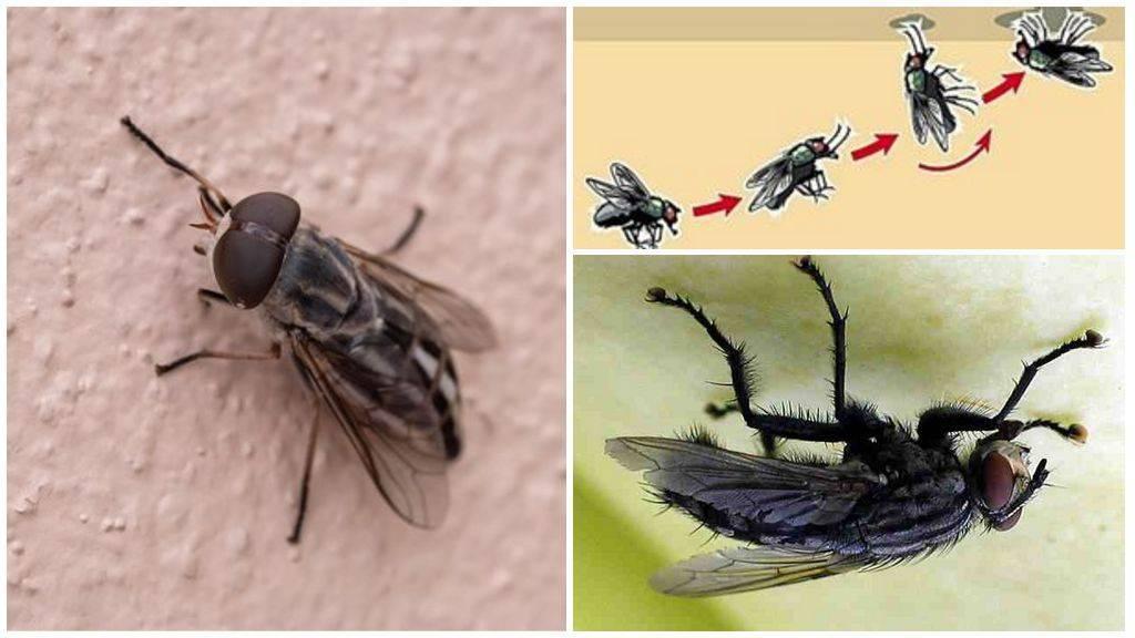 Как муха садится и держится на потолок. почему муха не падает с потолка? почему насекомые не падают с потолка