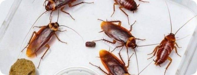 4 вида ловушек для тараканов