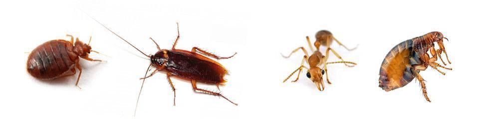 Куда обращаться если появились тараканы в подъезде?