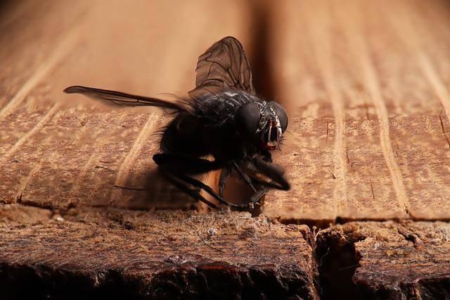 К чему снится много мух