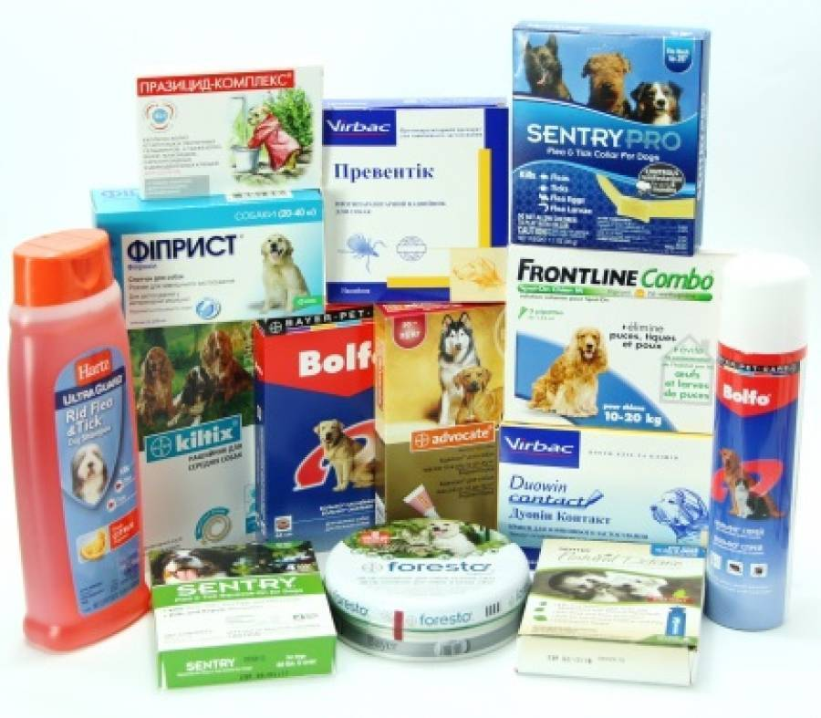 Капли от клещей для собак на холку: особенности применения и как выбрать лучшие?
