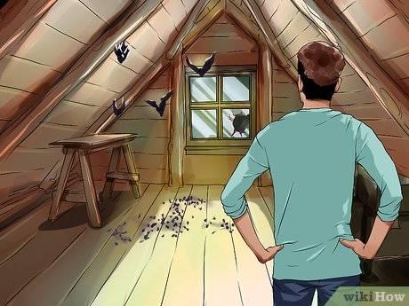Как избавиться от летучих мышей