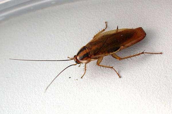 Где могут прятаться тараканы в квартире?