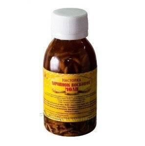 Польза пчелиной огневки: приготовление настойки