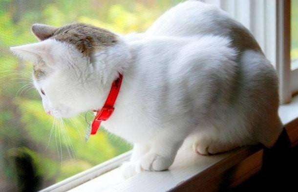 Противопаразитарная защита: выбираем ошейник от блох для кошки