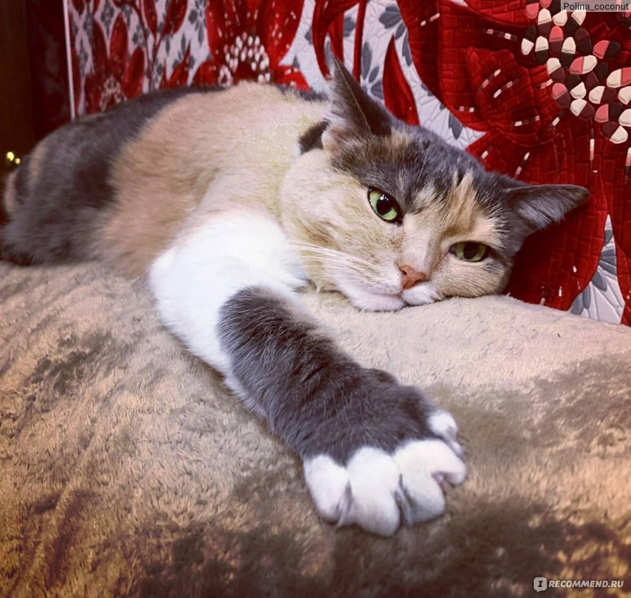 Капли от блох кот слизал что делать