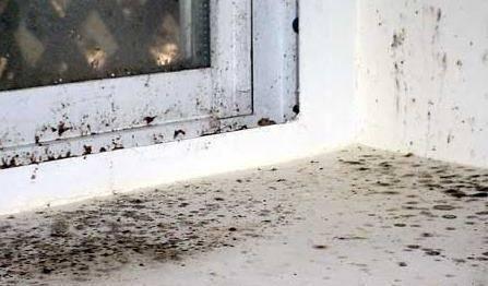 Причины появления и способы удаления плесени на пластиковых окнах